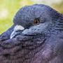 성북동비둘기