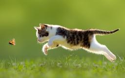 나비 쫓는 고양이